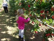 Our niece, Savannah - already an apple picking pro