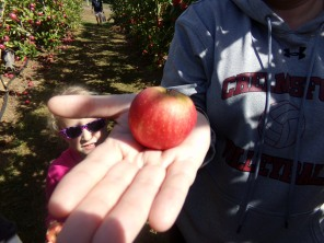 Finally! A Savannah-sized apple!
